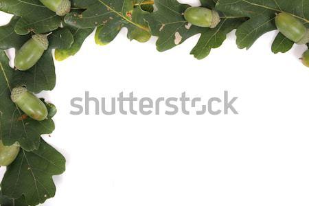 greeen frame Stock photo © jonnysek