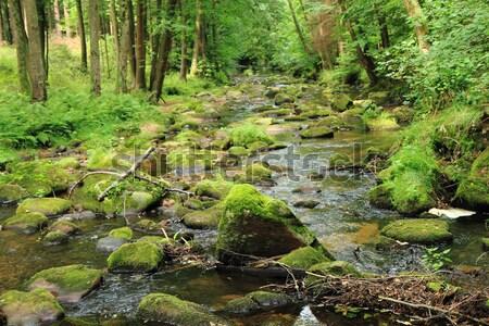 Rivière forêt printemps eau fond montagne Photo stock © jonnysek