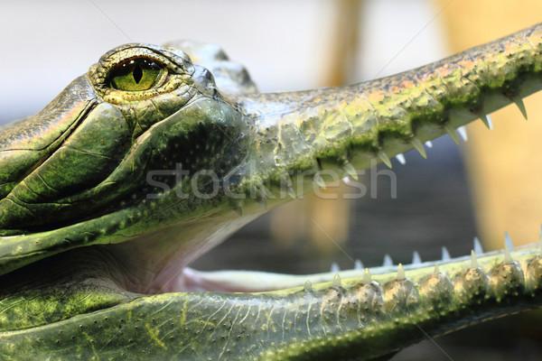 Kicsi krokodil részlet éles száj szem Stock fotó © jonnysek