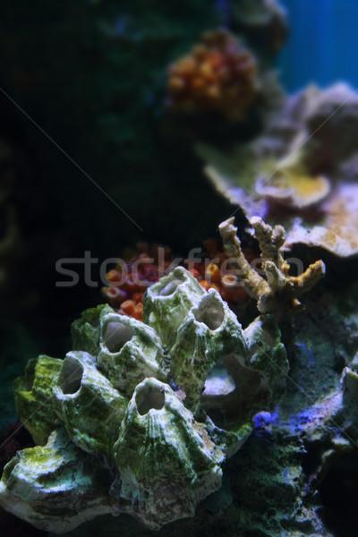水族館 いい 自然 海 水 自然 ストックフォト © jonnysek