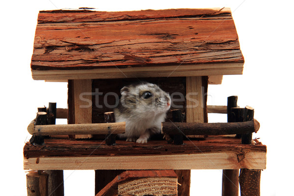 natural wooden house toy with dzungarian hamster Stock photo © jonnysek