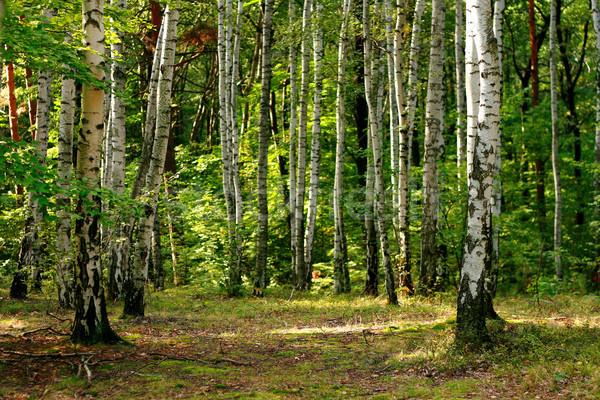 Groene bos voorjaar Tsjechische Republiek gras zon Stockfoto © jonnysek