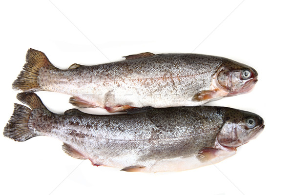 raw trout fishes Stock photo © jonnysek