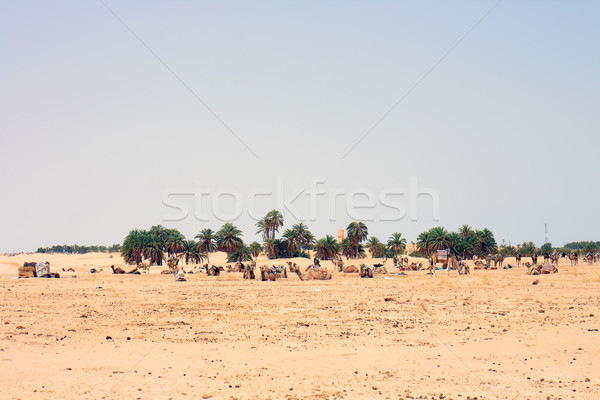 Woestijn sahara mensen zomer afrika tropische Stockfoto © jonnysek