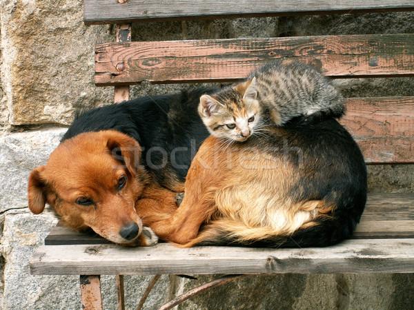 犬 小 猫 赤ちゃん 犬 ストックフォト © jonnysek