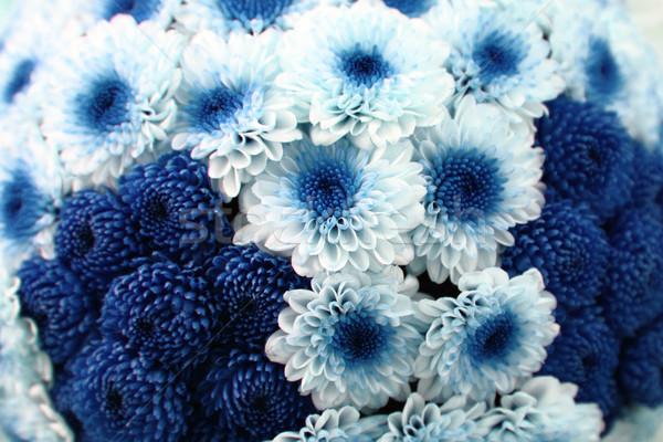 белый синий цветок Nice природного текстуры красоту Сток-фото © jonnysek