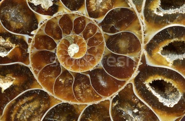 Vieux brun Nice géologie fond Rock Photo stock © jonnysek