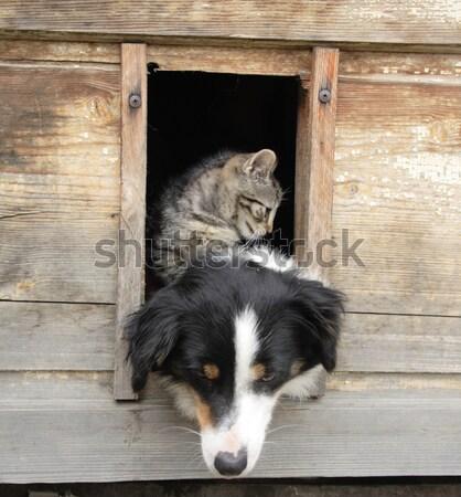 cat and dog at home Stock photo © jonnysek