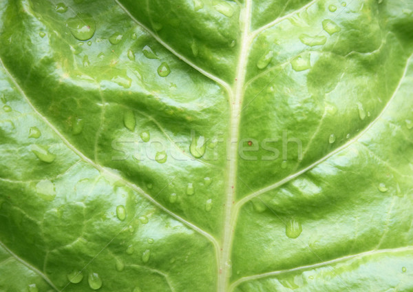 Feuille texture réel naturelles vert printemps Photo stock © jonnysek