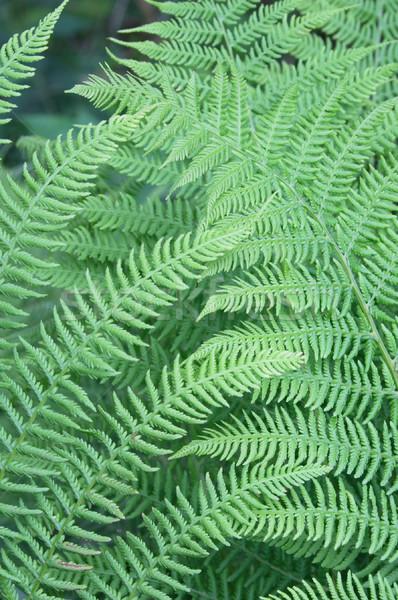 Levél igazi természetes zöld textúra erdő Stock fotó © jonnysek