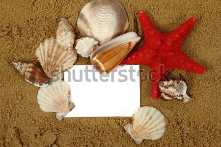 Stok fotoğraf: Beyaz · kâğıt · kum · kabukları · plaj · doğa
