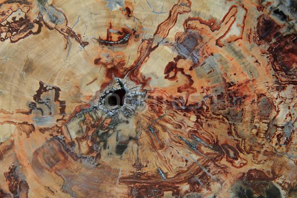 Kövület fa textúra természetes kő fal absztrakt Stock fotó © jonnysek