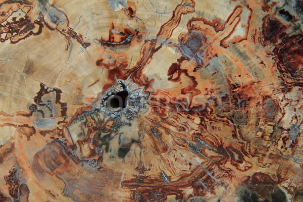 Fóssil textura de madeira naturalismo pedra parede abstrato Foto stock © jonnysek