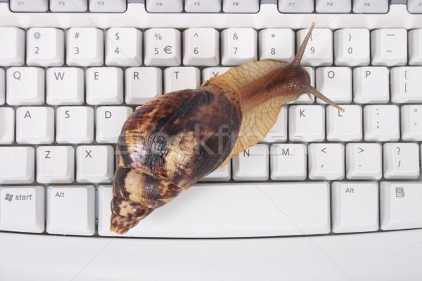 Escargot clavier grand brun blanche affaires Photo stock © jonnysek