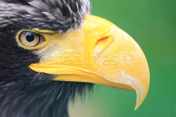 detail of black eagle head  Stock photo © jonnysek