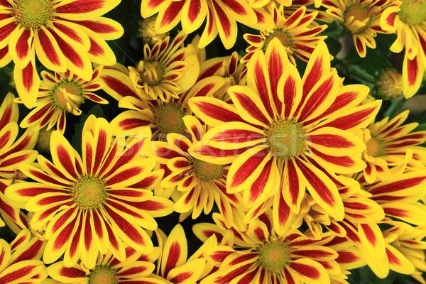 сокровище цветок цветы Nice природного природы Сток-фото © jonnysek