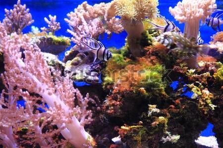Akvaryum büyük güzel doğa deniz balık Stok fotoğraf © jonnysek