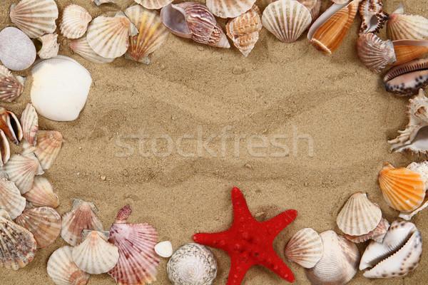 summer sea shells in the yellow sand Stock photo © jonnysek