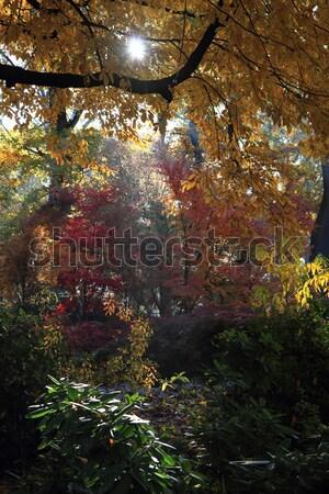 Couleur automne forêt Nice naturelles texture Photo stock © jonnysek
