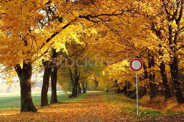 Foto d'archivio: Modo · autunno · parco · colore · foresta · natura