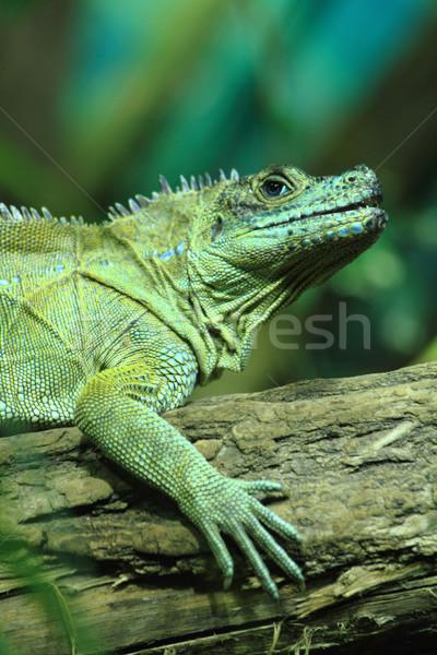 Yeşil kertenkele küçük ejderha orman doku Stok fotoğraf © jonnysek