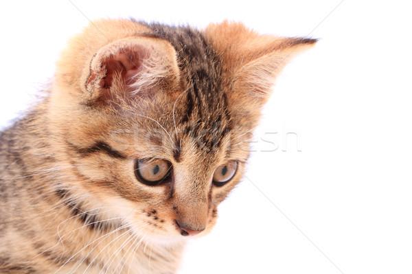 Stockfoto: Hoofd · klein · kat · geïsoleerd · witte · baby