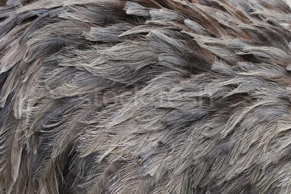 feather background Stock photo © jonnysek