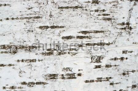 Abedul árbol corteza textura agradable naturales Foto stock © jonnysek