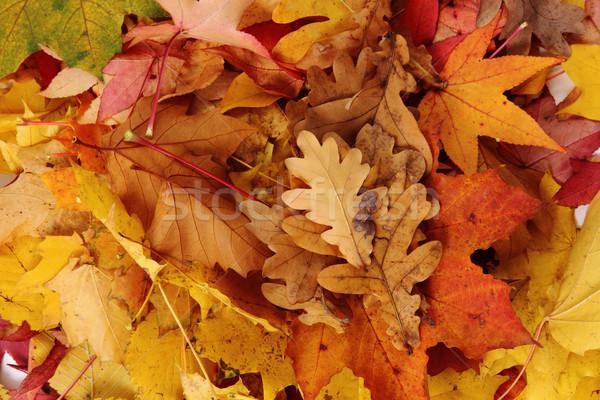 葉 いい 季節の テクスチャ 森林 自然 ストックフォト © jonnysek