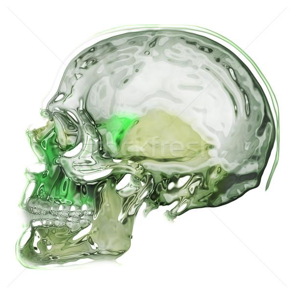 abstract human skull Stock photo © jonnysek