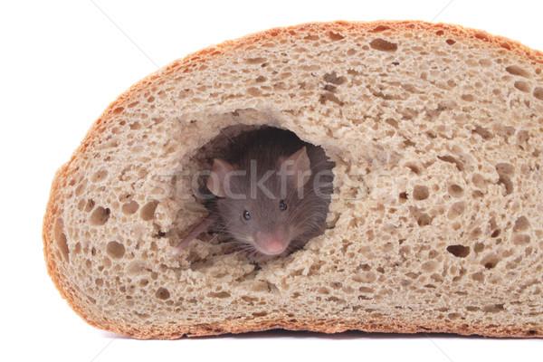 mouse and bread Stock photo © jonnysek