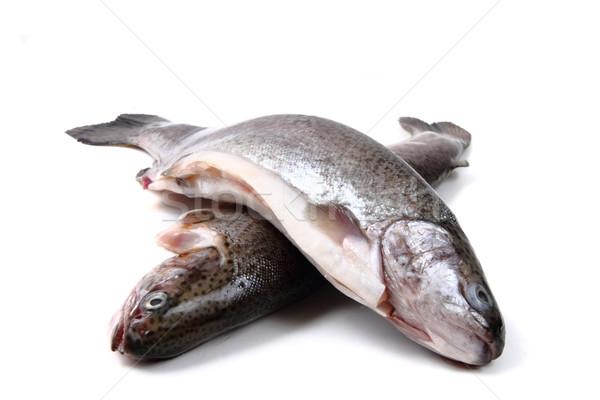 Trucha aislado blanco alimentos peces Foto stock © jonnysek