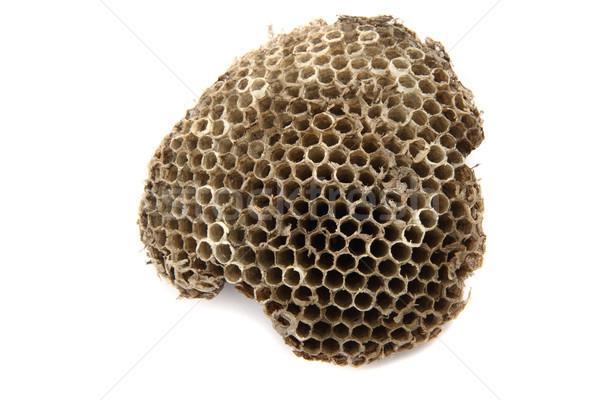 ストックフォト: ワスプ · 巣 · 孤立した · 白 · 紙 · テクスチャ