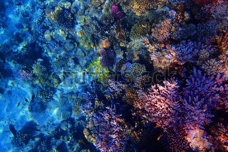 Minéral Nice naturelles texture nature Rock Photo stock © jonnysek