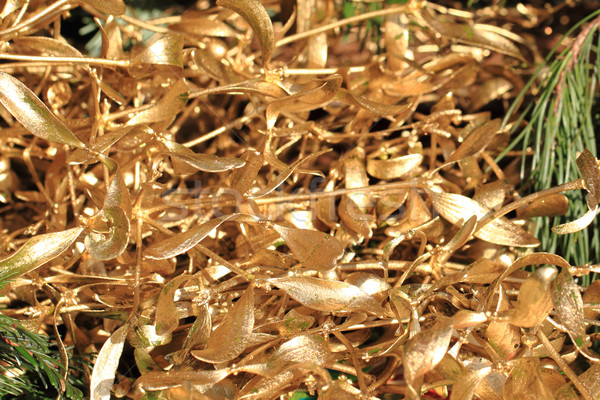 Goud maretak christmas mooie traditioneel natuur Stockfoto © jonnysek