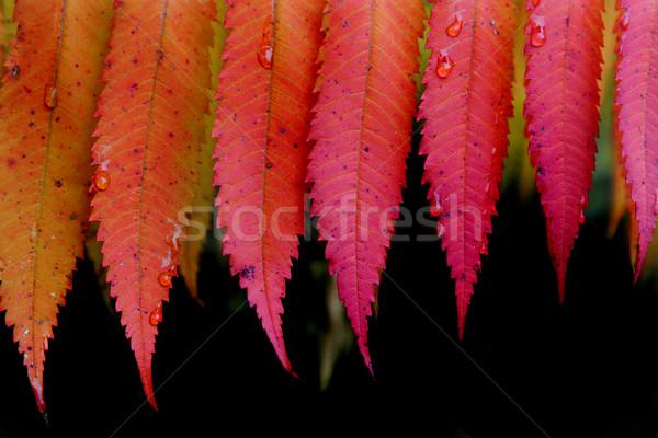 Laisse Nice naturelles texture forêt Photo stock © jonnysek