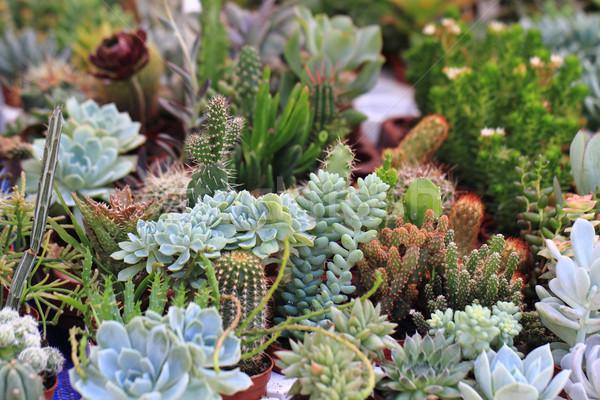 Növények egyéb fa természet kert háttér Stock fotó © jonnysek