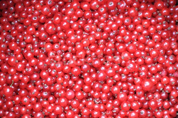 Frescos rojo grosella agradable frutas alimentos Foto stock © jonnysek