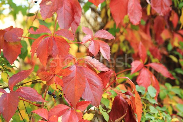 Nice naturale colore albero sole Foto d'archivio © jonnysek