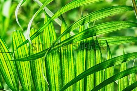 green natural leaf background Stock photo © jonnysek