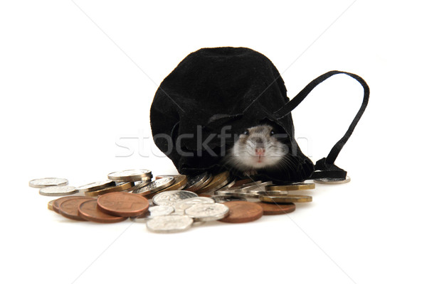 Hamster Çek madeni para yalıtılmış beyaz para Stok fotoğraf © jonnysek