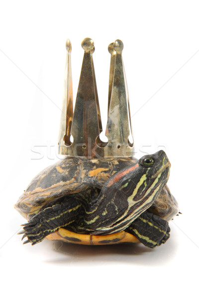 turtle as nice princess  Stock photo © jonnysek