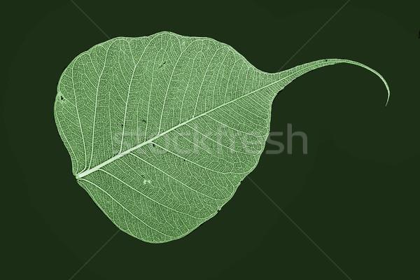 Yeşil yaprak doku yeşil orman doğa bahçe Stok fotoğraf © jonnysek