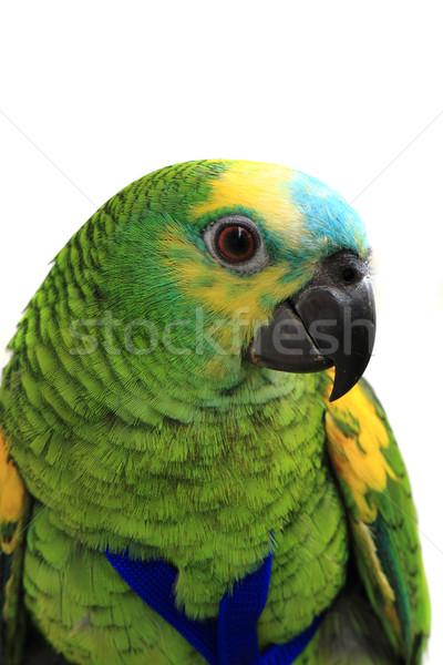 head of green exotic bird  Stock photo © jonnysek