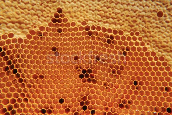 Mel cera bom naturalismo textura comida Foto stock © jonnysek