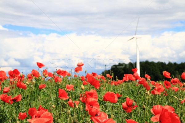 wind power and red flowers Stock photo © jonnysek