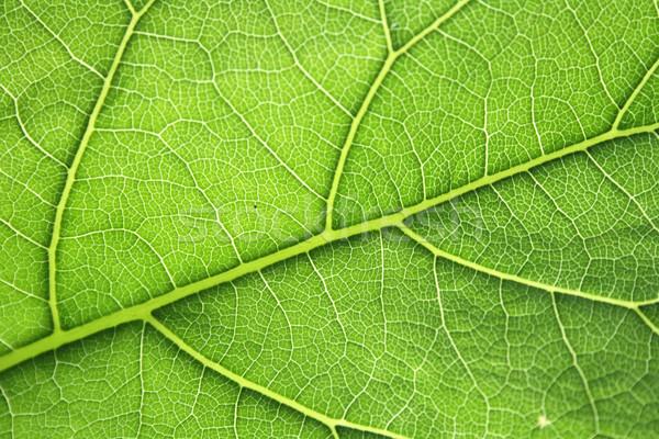 Feuille texture résumé forêt nature lumière Photo stock © jonnysek