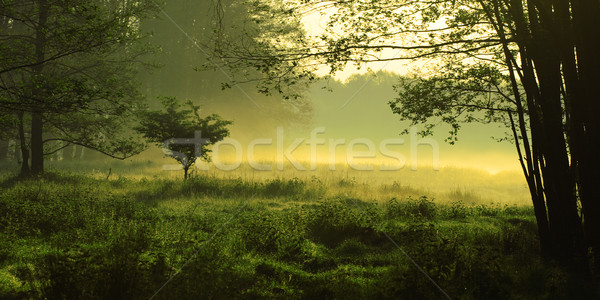 Mystical landscape Stock photo © joruba