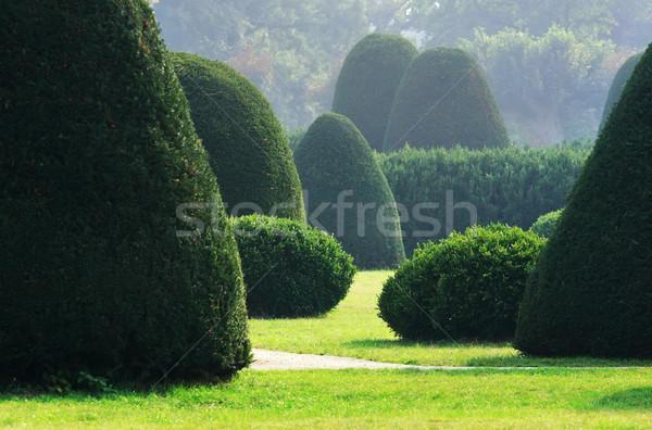 Formal jardim árvores inglês árvore Foto stock © joruba