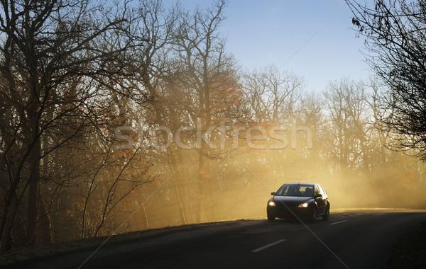 Carro condução floresta estrada sol Foto stock © joruba